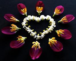 flowers_heart